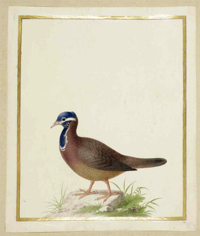 Nicolas Robert (French, 1614-1685), Blue-headed Dove [Colombe a tete bleue (Starnoenas cyanocephala)]