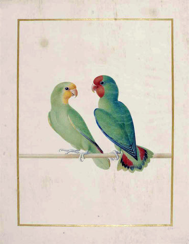Nicolas Robert (French, 1614-1685), Red-headed Lovebird [Inseperable a tete rouge (Agapornis pullaris)]