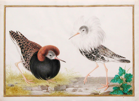 Nicolas Robert (French, 1614-1685), Two Male Ruff on the Lek