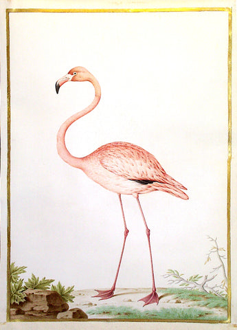 Nicolas Robert (French, 1614-1685), Flamingo