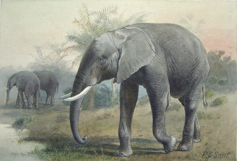 Pierre Jacques Smit (Dutch, 1863-1960) Loxodonta Africana (African Elephant)