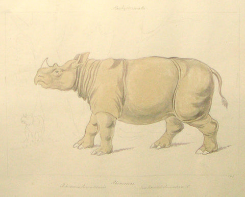 Charles Hamilton Smith 1776 - 1859), Rhinoceros