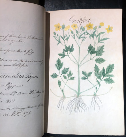 William Sutcliffe, (19th-century) A Collection of English Plants, Drawn and Colored by William Sutcliffe.