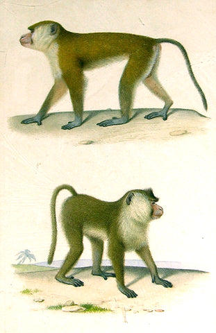 Edouard Travies (French, 1809 - 1870) Monkey Study