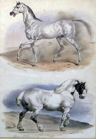 Edouard Travies (French, 1809 - 1870) An Arab Stallion and a Carthorse