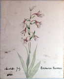 Elizabeth Twining (British, 1805-1889), and Other Contributors, Album of Original Watercolors and Sketches