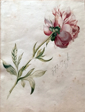 Attributed to Georgius Jacobus Johannes van Os (Dutch, 1782-1861), Peony