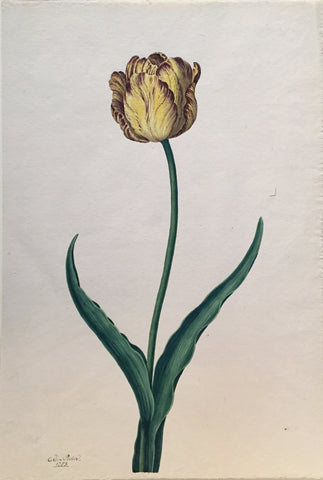 Christian Van Pesch (Belgian, 1728-1784), Yellow and Purple Tulip