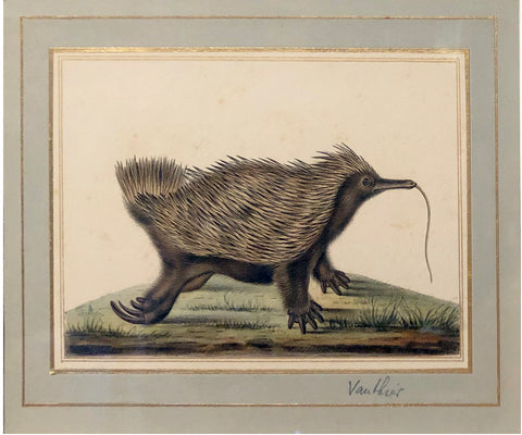 Antoine Charles Vauthier (French, 1790-1879) Echidnas