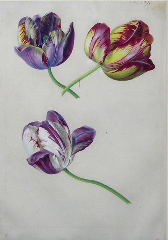 Viennese School, Tulips