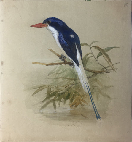 Joseph Wolf  (1820-1899), Joseph Smit (1836-1929), Johannes Geradus Keulemans (1842-1912) and Marie-Firmin Bocourt (b. 1819).  A collection of 44 watercolors of Birds and Animals