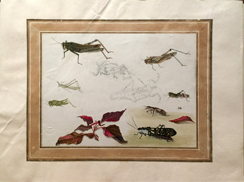 Company School (Nineteenth-Century), [Plant and Insect Study]