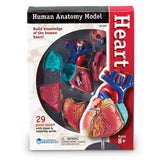 Heart Anatomy Model - EducationalLearningGames.com