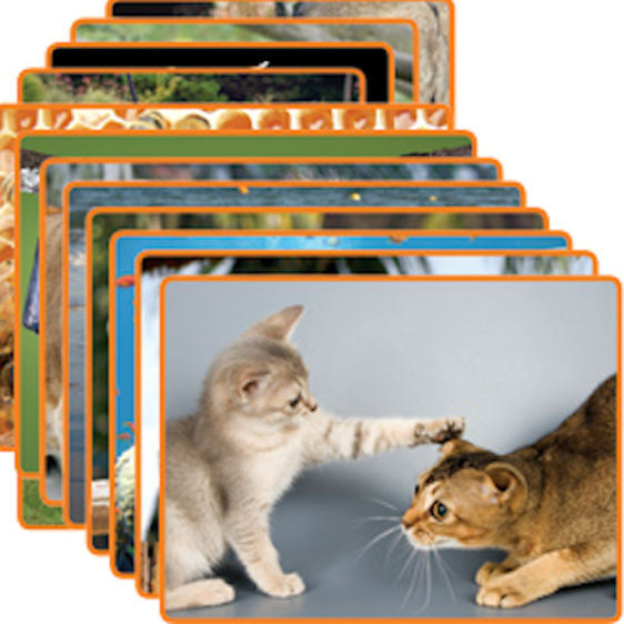 Animals Early Literacy Comprehension Cards - EducationalLearningGames.com