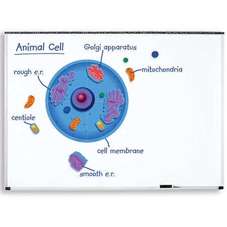 Giant Magnetic Animal Cell - EducationalLearningGames.com
