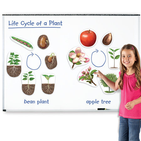 Giant Magnetic Plant Life Cycles - EducationalLearningGames.com