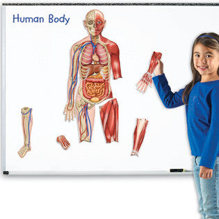 Human Body Double-Sided Magnetic - EducationalLeaningGames.com