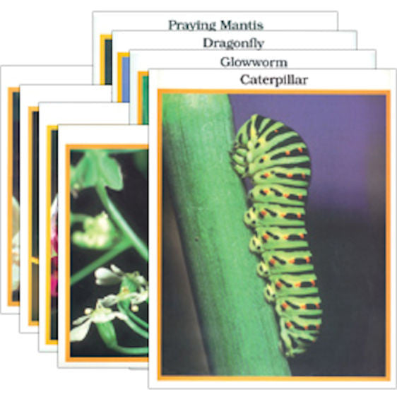 Insects Photo Activity Cards - EducationalLearningGames.com