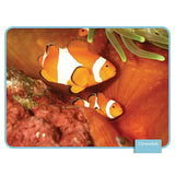 Ocean Life Reading Comprehension Cards - EducationalLearningGames.com