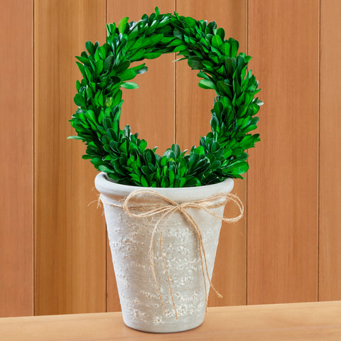 Mud Pie Preserved Boxwood Topiary Wreath