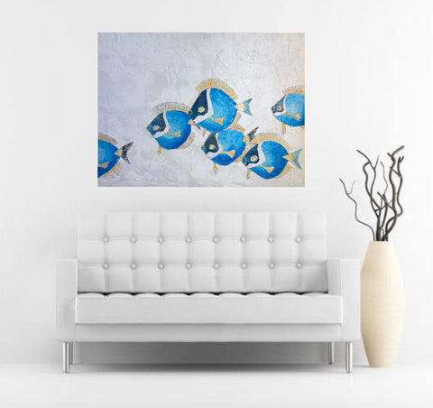Powder Blue Tang - Coral reef fish