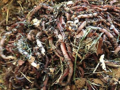 1/2 lb Red Wigglers/European Nightcrawlers Mix - Buckeye Organics