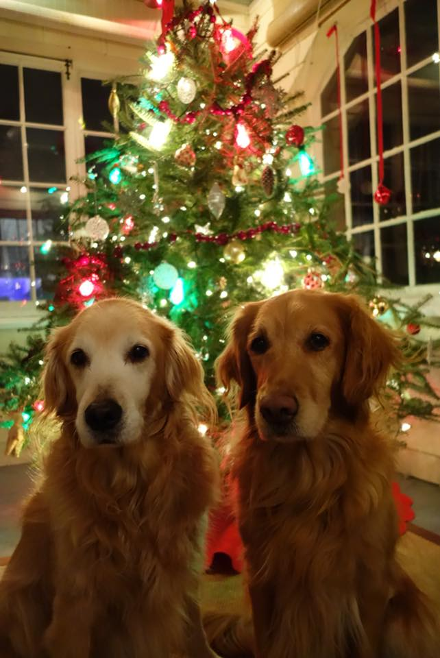 Dog Photos with Santa Claus on Dec 2, 11am to 2pm
