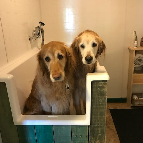 Self Serve Dog Wash is OPEN!