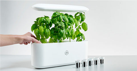 horticulture - herb garden - indoor gardening - indiegogo - Luxury Gifts for Mom - Luxury Mother's Day Gifts - Luxury Gifts for Her