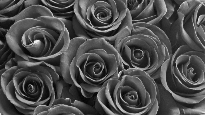 Are Black Roses Real?
