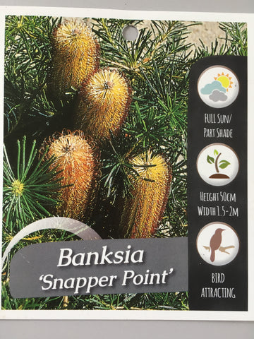 Banksia Snapper Point