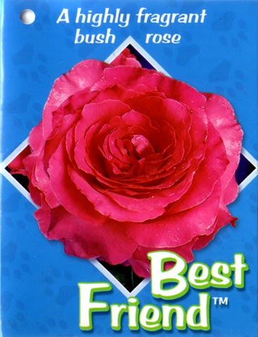 Best Friend NR 3ft Standard Rose 200mm