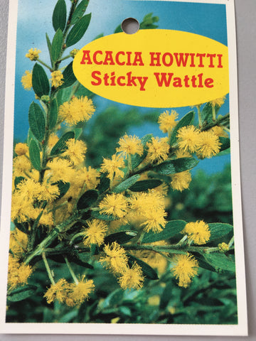 Acacia Howitti (Sticky Wattle) 140mm pot