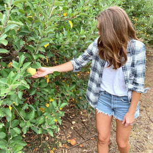APPLE PICKIN' IN PLAID