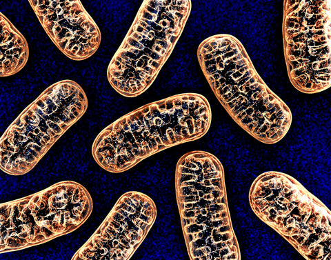 What Is PQQ? The Mitochondrial Powerhouse!