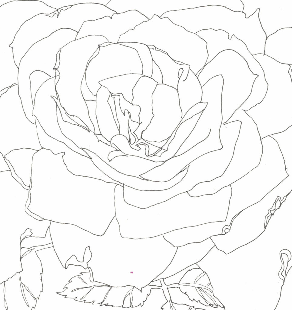 Rose Portrait 14