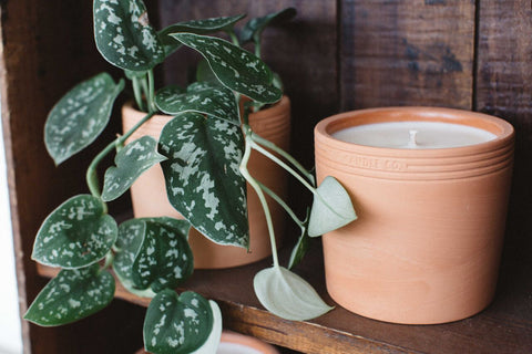 pf-candle-co-terra-candle-makers-and-goods