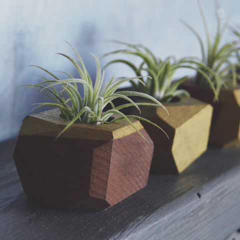 Mini Wood Geo Airplant Holder {goodsmith}