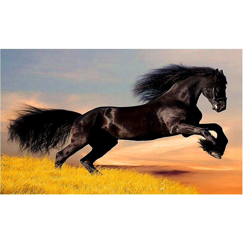 DIY Diamond Painting - Great Stallion - Zana Horse - 1