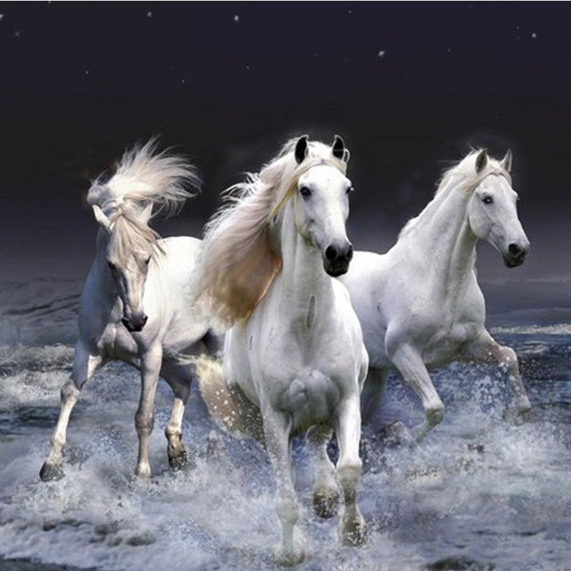 DIY Diamond Painting - Three White Horse - Zana Horse - 1