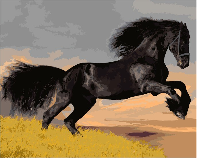 Painting By Numbers - Black Horse - Zana Horse - 1