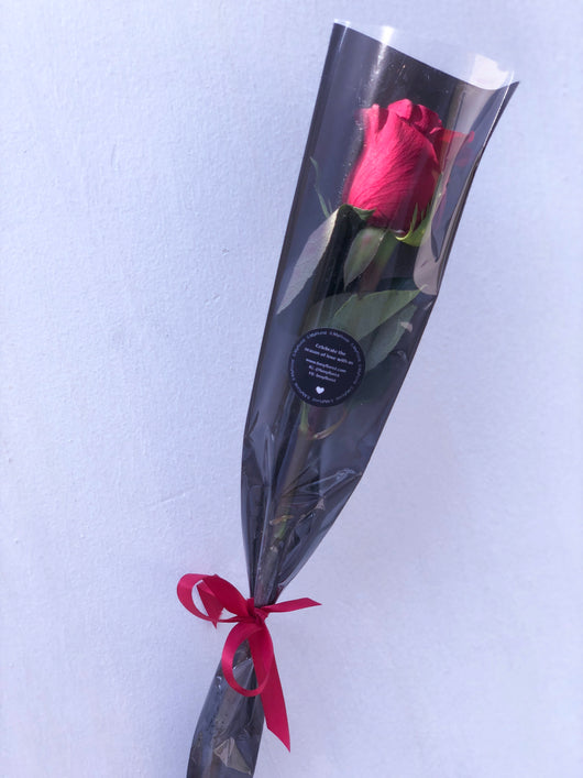 Single Stalk of Rose