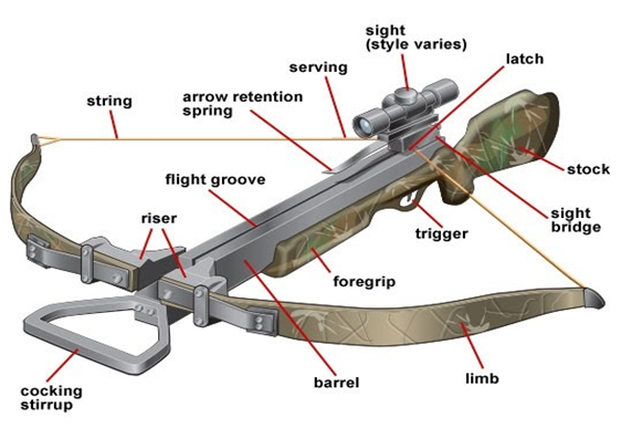 Complete Guide on How to Use Bowfishing Crossbow