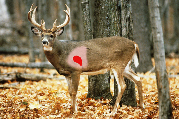 tips for bowhunting a whitetail deer \u2013 hunting bowwhitetail deer kill zone deer kill zone diagram