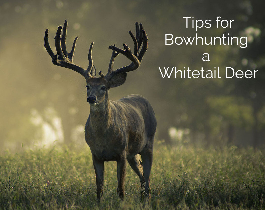 Tips for Bowhunting a Whitetail Deer