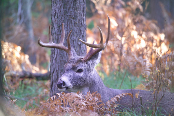 Tips for Bowhunting a Whitetail Deer – Hunting-Bow