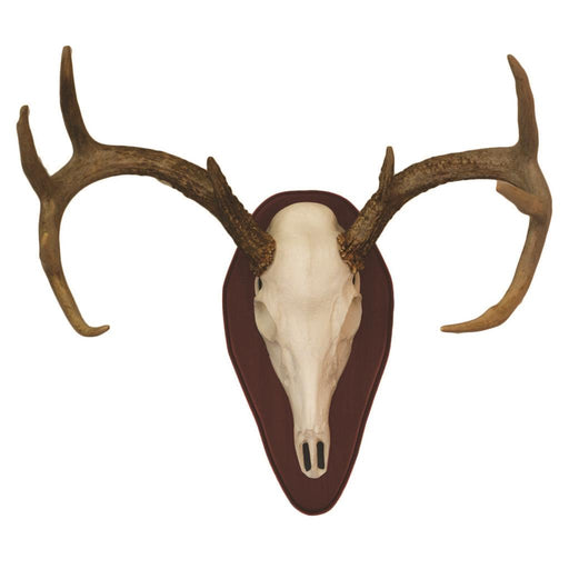 Hunter Specialties Mount Kit Half Skull Deer Cherry