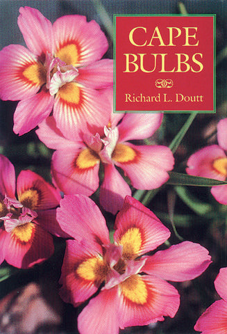 Cape Bulbs