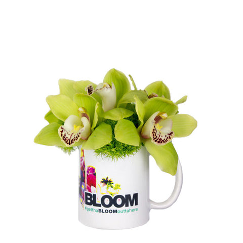 symbidium orchids, moss in a mug