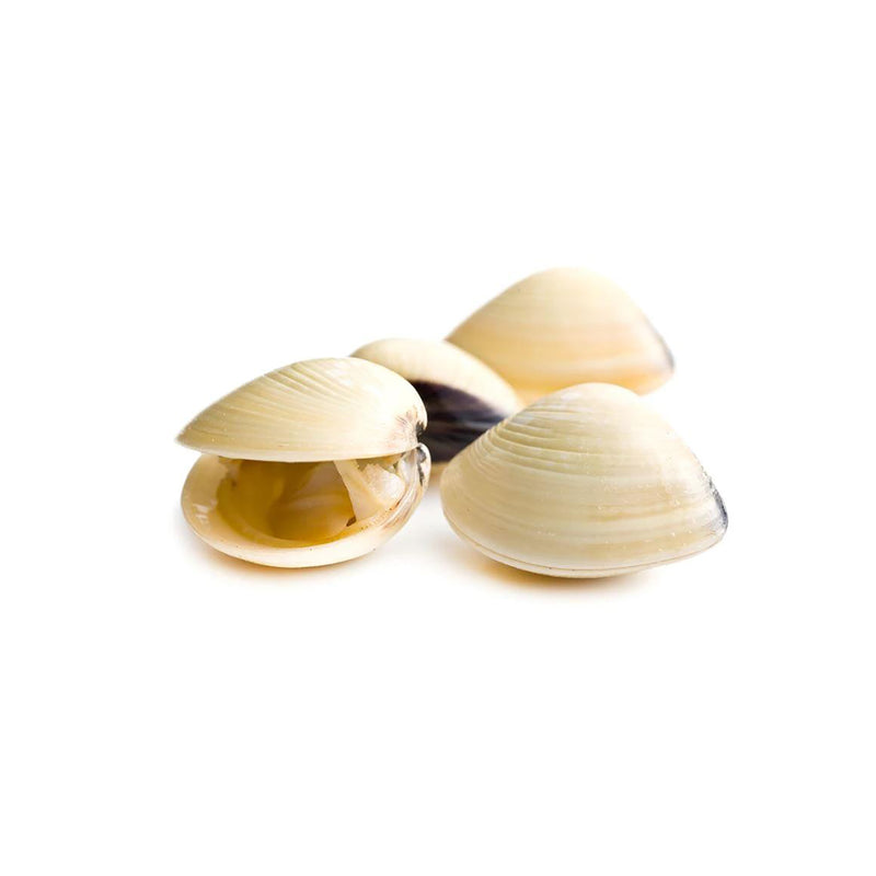 Frozen White Clam 1kg